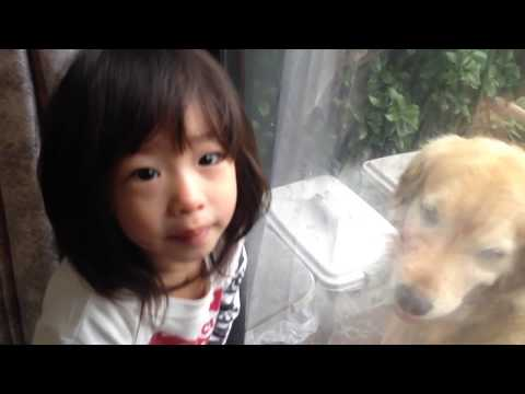 [Full]The golden retriever Alia with my daughter in the morning!
