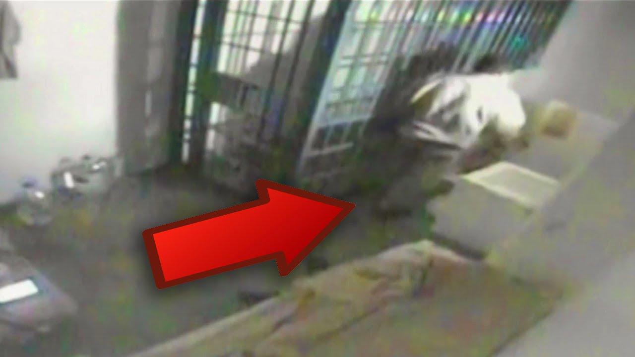 who is el chapo  explained escape with video 2015 guzman