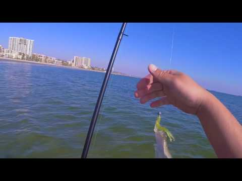 Halibut Fishing in the Long Beach Surf