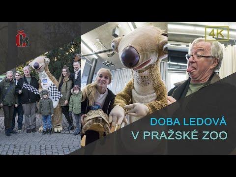 Sid z Doby Ledové v pražské ZOO - Kodetová, Zedníčková, Lábus, Vágner