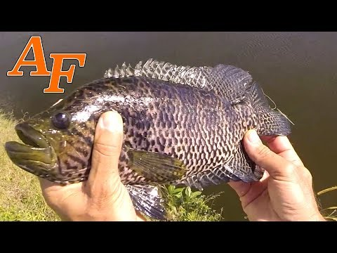 Do all of Florida's canals have fish in them? Canal Fishing Florida USA  EP.387
