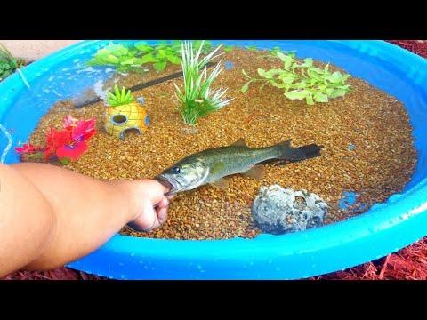 DIY HOMEMADE POOL FISH POND Aquarium!