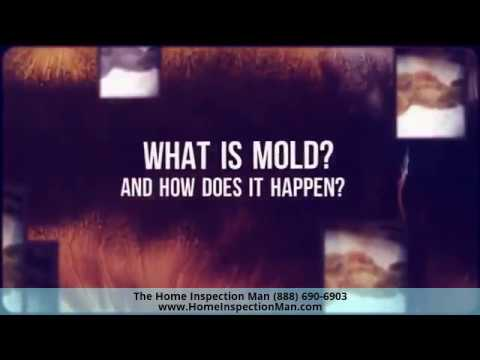 Home Inspector Plainfield IL Shows Mold