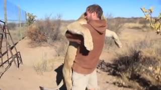 Funny cute lion hugging human