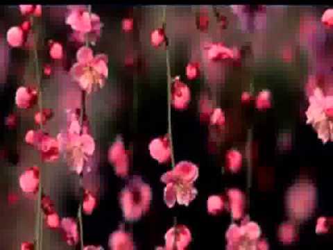 Nowruz Documentary