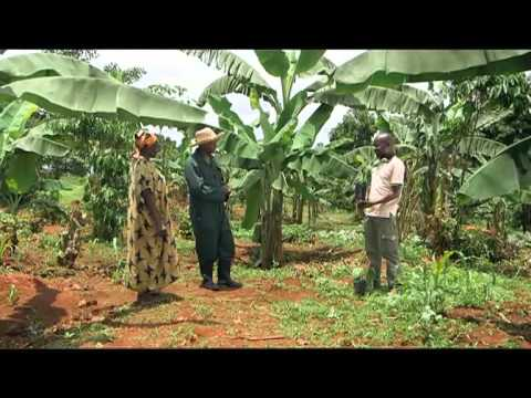 Shamba Shape Up Sn 05 - Ep 21 Apples, Tissue Culture Banana, Dairy Cows (Swahili)