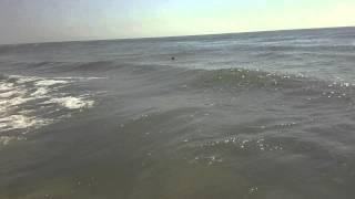 rc boat wave jumping aeromarine mini x