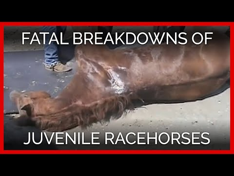 Young Blood: Fatal Breakdowns of Juvenile Racehorses