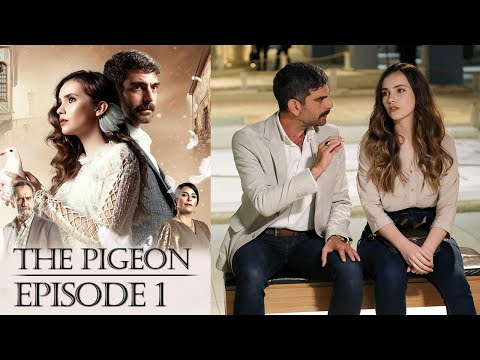 Download Güvercin | The Pigeon Episode 1 (English Subtitles)