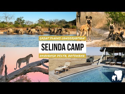 Selinda Camp Botswana: Luxury Safari Great Plains Conservation / Selinda Reserve