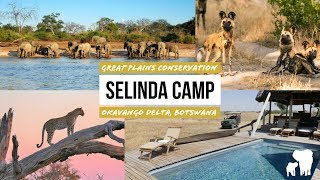 Selinda Camp Botswana: Luxury Safari Great Plains Conservation / Selinda Reserve