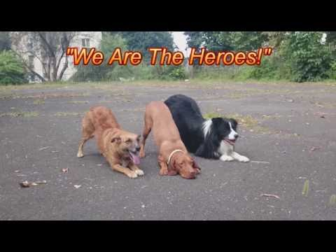 Caesar with Csitri & Rocky: Dog Dancing Training ♪♫♪