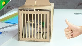 How to Make Rat Trap from Cardboard at Home