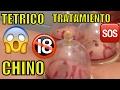 TETRICO TRATAMIENTO CHINO EXTRACCION DE SANGRE TOXICA MASAJE MEDICINAL DOCTOR CHINO DOLOR DE ESPALDA