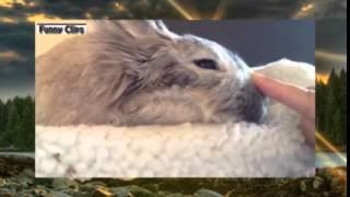 Смешные видео   Забавные животные, кролики 2015