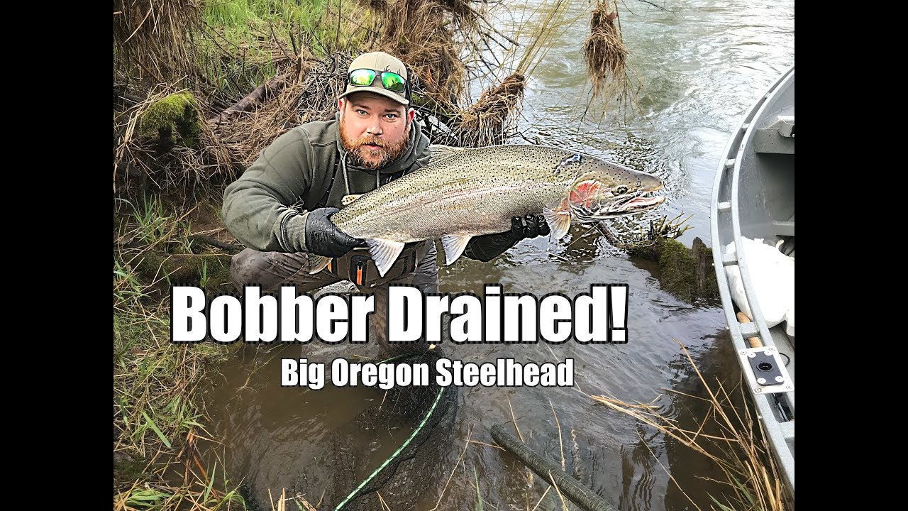 Oregon monster steelhead   Bobber down! - YouTube