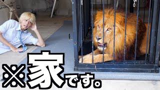 撮影協力:湘南動物プロダクション http://www.shonan-animal.jp/ チャ...