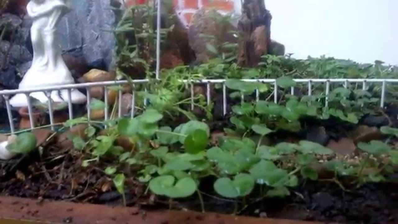 mini estanque de jardin