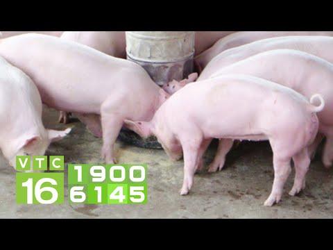 Công thức phối trộn thức ăn cho lợn từ phụ phẩm nông nghiệp