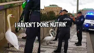 Ozzy Man Reviews: Criminal Swan