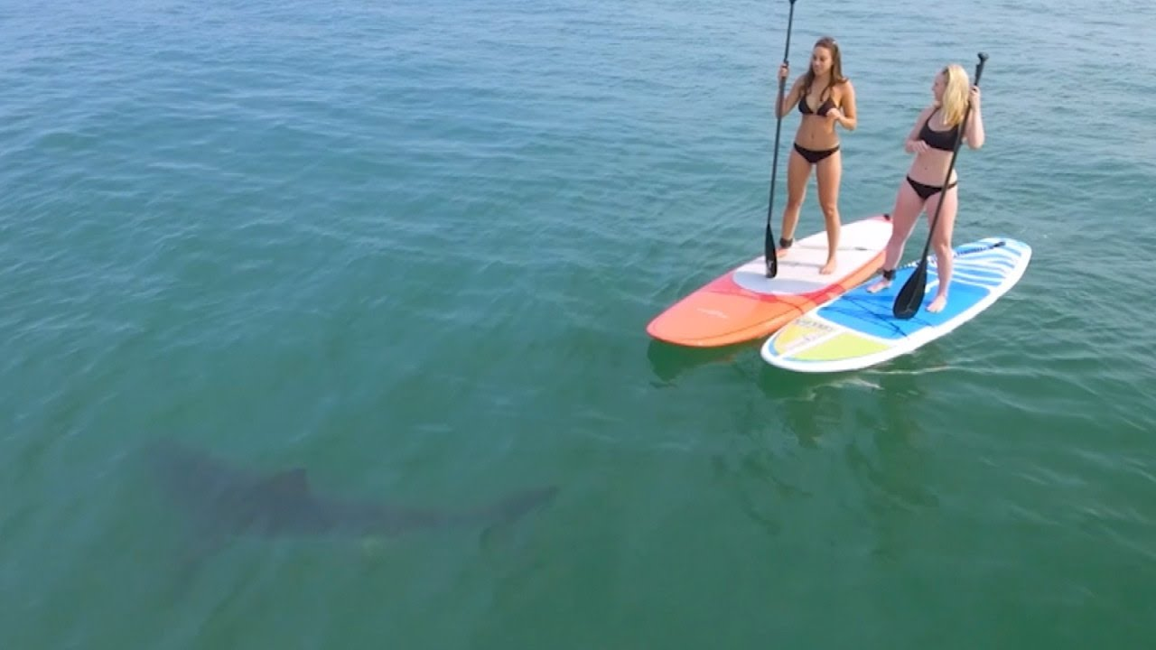 Great White Sharks Give Paddle boarders A Scare of Their Lives.