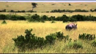 Гранд Сафари, Кения, Масай Мара