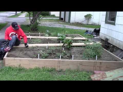 Weeding the KAC Peace Garden | Part 2