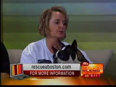 Nebraska Boston Terrier Rescue - Omaha Morning Blend