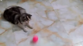 Candy-likes to play with the ball
