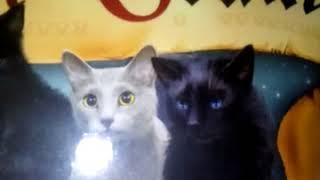 Обзор на 5 цикл || Коты-Воители