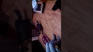 Коты испугались  коврика... Жесть