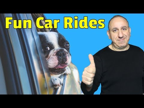 My Dog Gets Anxious In The Car - How To Help My Dog