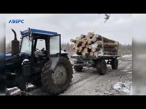 ТРК Аверс: Під виглядом дров для дитсадка: як у Сошично вивозять немаркований ліс