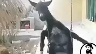 Hayvanlar alemi dublaj