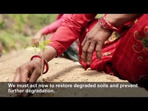 Soil carbon stocks are vital for food production and climate change mitigation