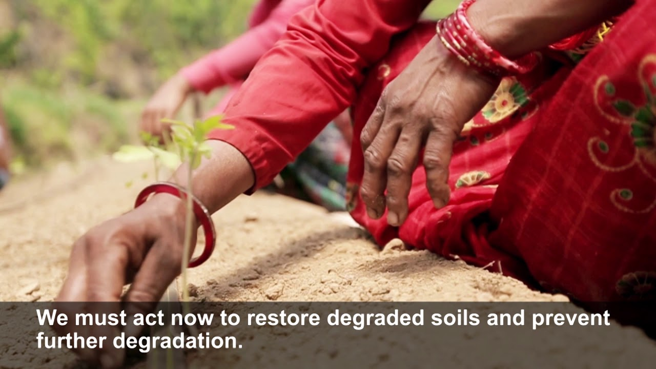 (December 2017) Soil carbon stocks are vital for food production and climate change mitigation
