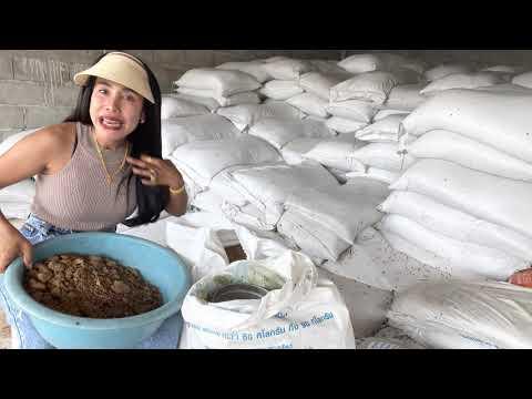 สูตรอาหารวัวขุน อ้วนเรทราคาถูก 6.6 บาท วัวขุนเร่งเนื้อดี แม่พันธ์ุกินได้   095-4294091ครูบิว