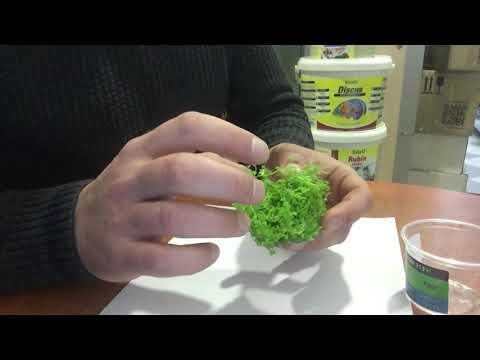 Аквариумное растение Микрантемум «Монте Карло» (Micranthemum sp. Monte Carlo 3) в питательном геле