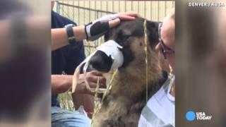 Dog with muzzle taped shut saved by good samaritan