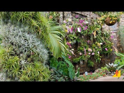 Clique e veja o vídeo Tipos de Plantas para Jardins Verticais - Curso a Distância Jardins Verticais
