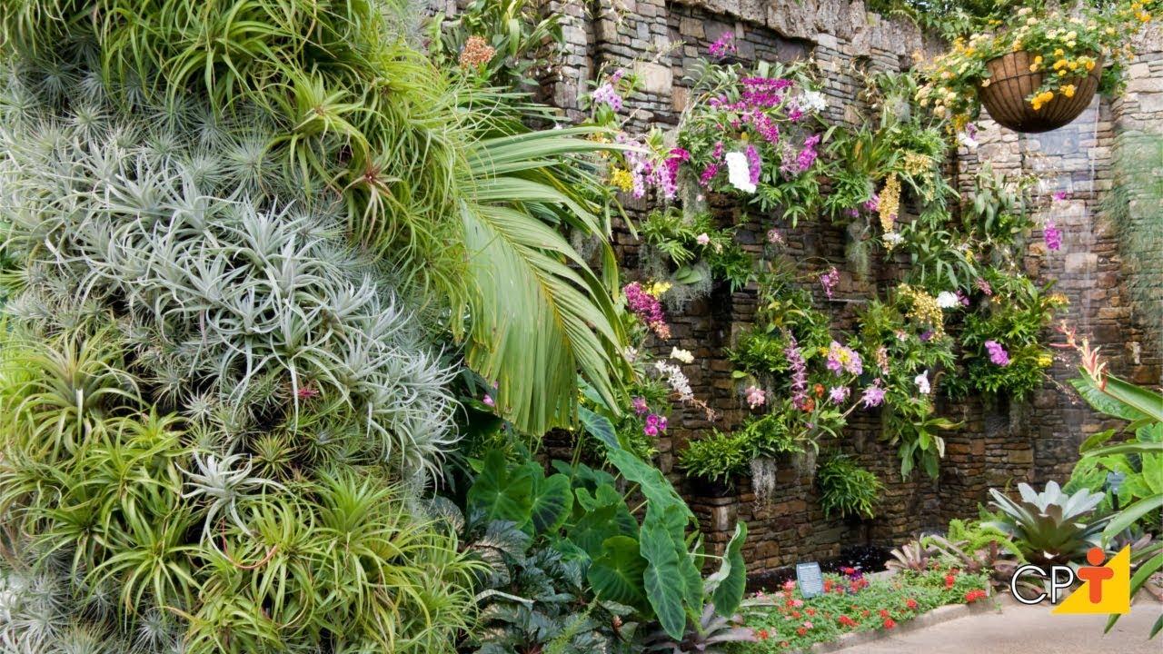 Tipos de plantas para jardins verticais curso a for Plantas decorativas tipos