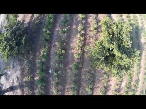 Phoenix Quadcopter green chili farm survey