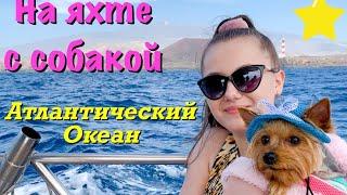 Киты в Атлантическом океане // С собакой на яхте на Канарах // Отдых с собакой в Испании