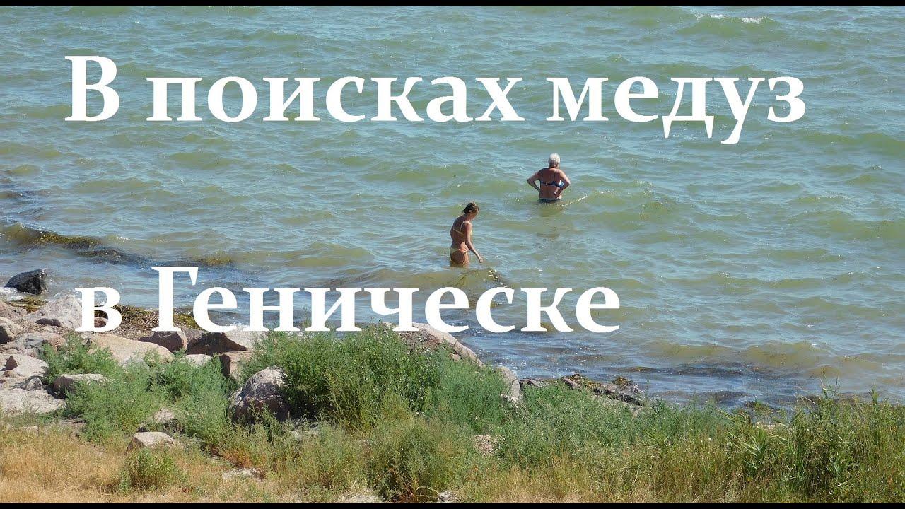 Ищу медуз в Геническе у берега  в прямом эфире