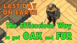 LDOE: How to get Oak And Fur in Last Day on Earth (v.1.6) (Vid#41)