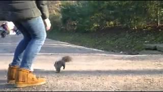 Schönbrunn Palace: Squirrels