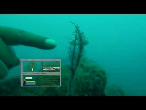 Underwater Florini Initial Scopes Analysis 1a 1