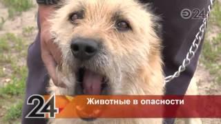 В Казани неизвестные поджигают животных