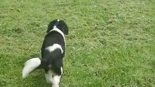 Loads of happy dogs