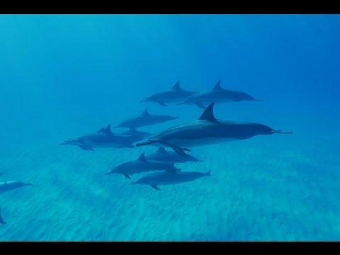 Hawaii Seikluskoolitust tutvustav kogunemine